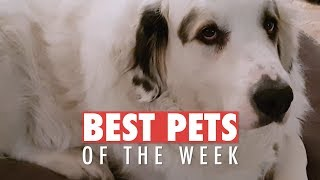 Best Pets of the Week | April 2018 Week 1