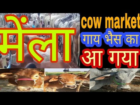 108 cow market 2018 | big big indian and desi cows nd buffalo