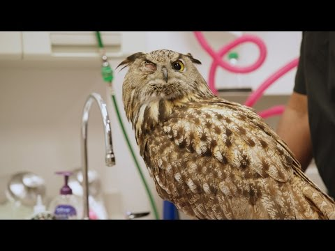 A Patient That Gives a Hoot