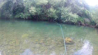 Summer dry fly fishing for grayling and trout|Fly fishing Croatia[DRY FLY]
