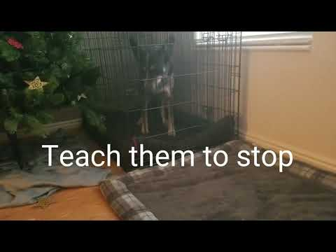 Barking in the crate dog training