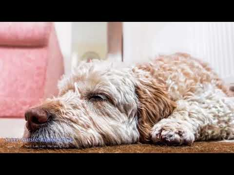 Pet Therapy | Dog Relaxation Music, Cat Sleep, Anxiety Prevention, Help Your Anxious Or Nervous Dog