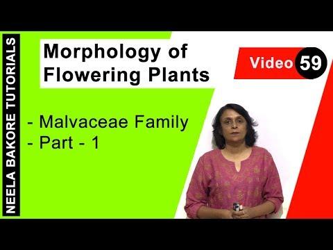 Morphology of Flowering Plants  - Malvaceae Family  - Part - 1