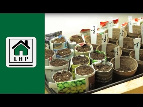 Seed Starting Basics Made Easy - Paper Pots and Jiffy Pots - LHP