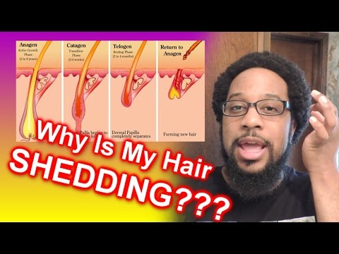 #592 - Why is My Hair SHEDDING??? | Hair Growth Cycles Explained