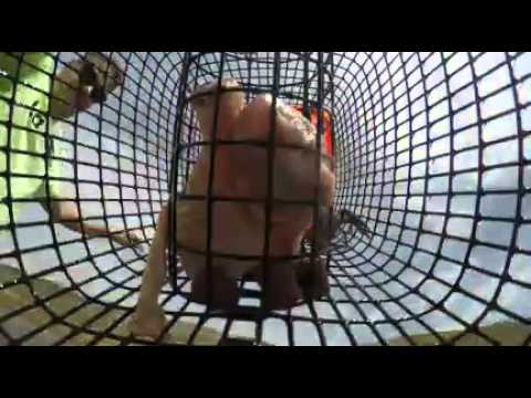Crawfish trap GoPro strawberry utah