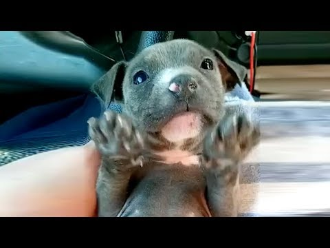 Frozen puppy shakes as the rescuers try to warm her up