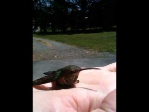 Hummingbird in my hand
