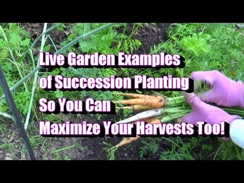 Garden Examples Of Succession Plantings - How to Maximize Your Harvest