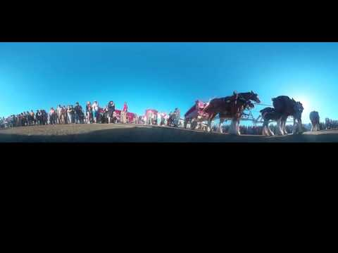 360 Video - Clydesdale Horses