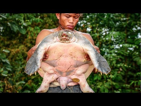 Primitive Technology, Giant turtle was trapped by accidentally