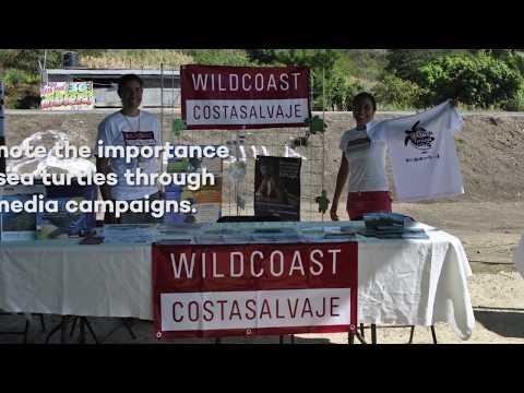 Help Us Save Sea Turtles in Oaxaca
