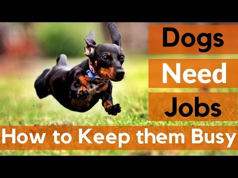 Dogs Need Jobs | 12 Ways to Keep Your Dog Busy
