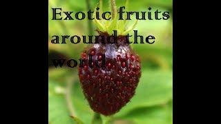 Exotic fruits around the world