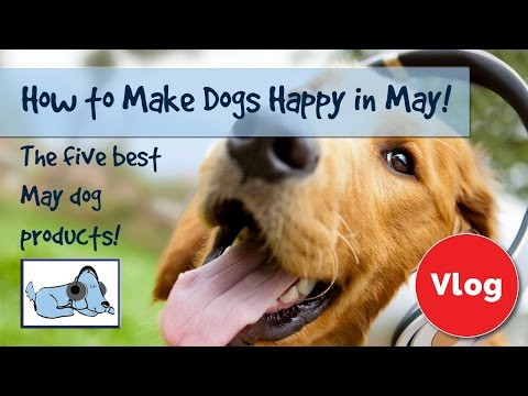How to Make Your Dog Happy in May! Top 5 May Dog Products, Gifts for your Dog! 🐶 #REVIEWVLOG03