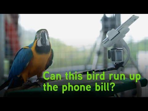 Zero Bill Shock Promise: Bird Call