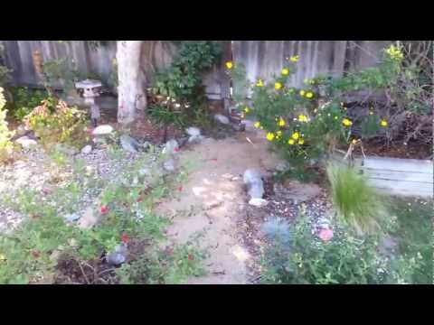 Drought Tolerant Landscape 1 year old