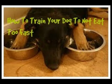 How To Train Your Dog To Not Eat Too Fast