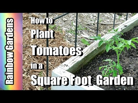 How to Plant Tomatoes in a Square Foot Garden and Trellis Ideas