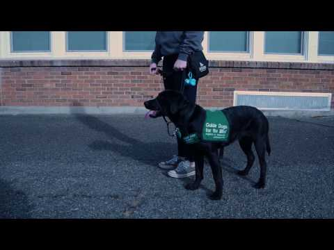 Guide Dogs For The Blind Project