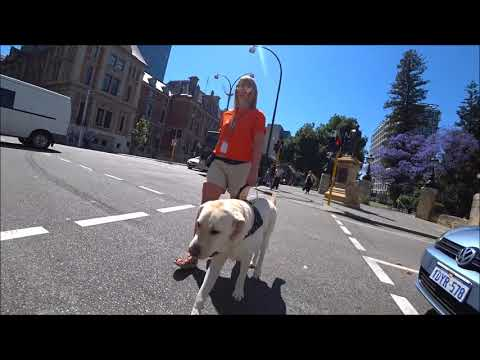Guide Dogs WA - What does a Guide Dog do? Olly - Must see super dog