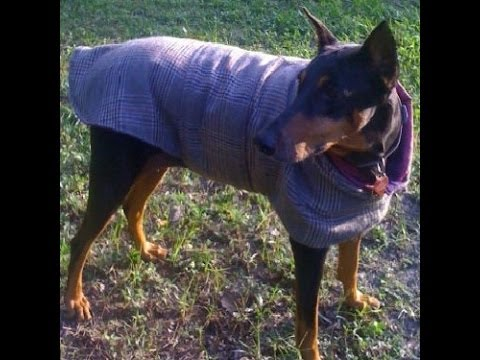 Lesson 21 - How to Make A Tailored Coat for your Pet