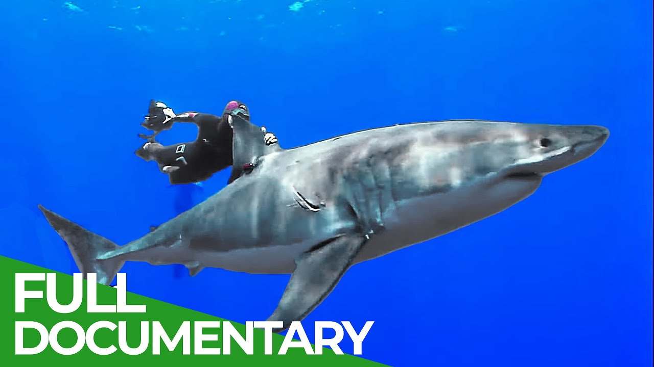 Adventure Ocean Quest: Discovering Another World | Special Episode | Free Documentary Nature