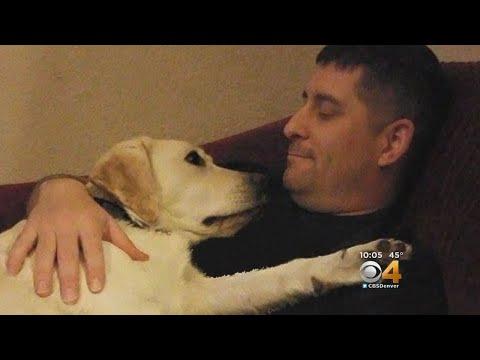 Servicemember Claims Discrimination Over Service Dog On Southwest Flight