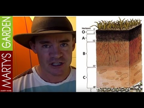 Super Healthy Plant Vegetable Growth With Soil Profiles