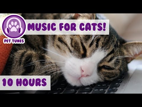 Help Your Cat Destress and Relax With Our Tranquil Music! Help Your Cat Rest and Sleep!