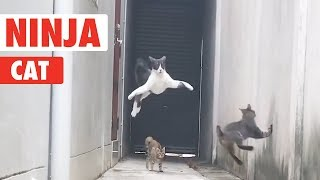 Ninja Cat!   Catch Me If You Can