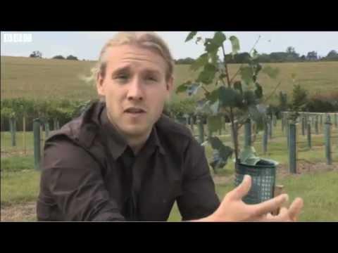 Truffle Plantation in England