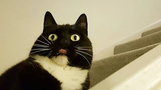 CATS who think they are DOGS! - Proper LAUGHING SESSION for you :)
