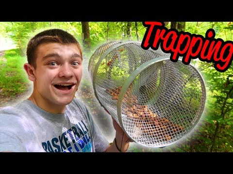Squirrel Trapping with a Minnow Trap???