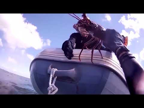 Spiny Lobsters - How to Get Your Limit