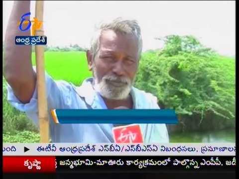 Icornia weed problems increased in Krishna delta - జైకిసాన్ - on 7th October 2014