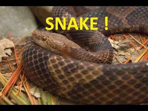 SNAKE ~ I Catch Another Snake!