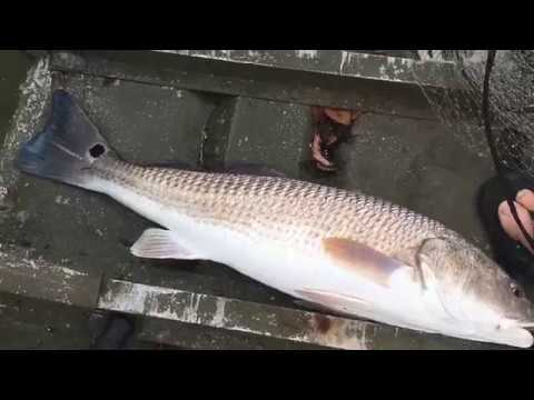 26 Inch Red Drum