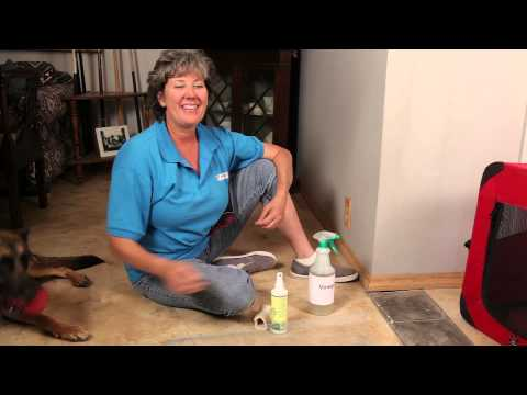 Keeping Dogs From Chewing & Clawing Molding : Dog Training & Basic Obedience