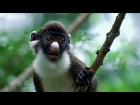ANIMAL CRACKERS (The Best of BBC One's Walk On The Wild Side) [Shamrock Edit] (HQ)