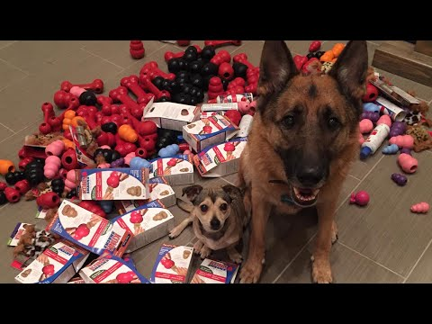 Dunder and Munster's 2014 Christmas Donations to the Animal Shelter