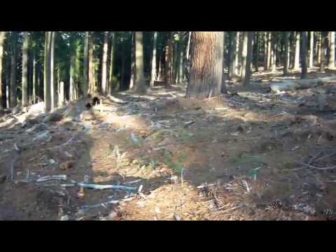 How to find morel mushrooms in California.