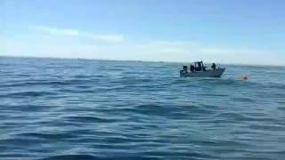 Vis vang vandag in st helenabaai