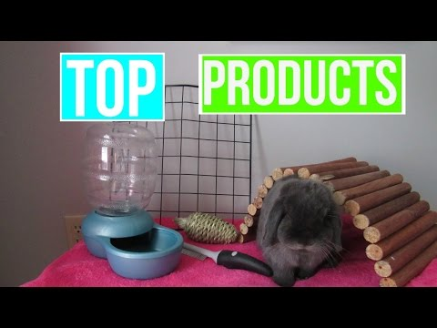 Top 5 Rabbit Products   LovabeLop