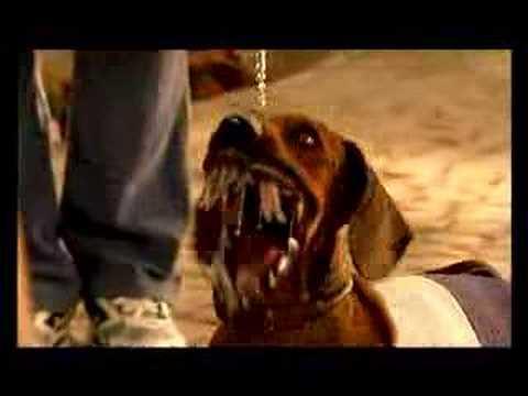 Benadryl Dog