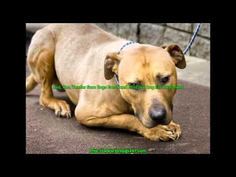 Dog Ear Mite Treatment.mp4