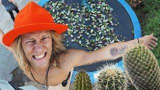Cactus Trampoline Experiment!!