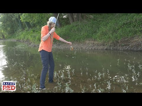 How to Make an Old-Fashioned Cane Fishing Pole