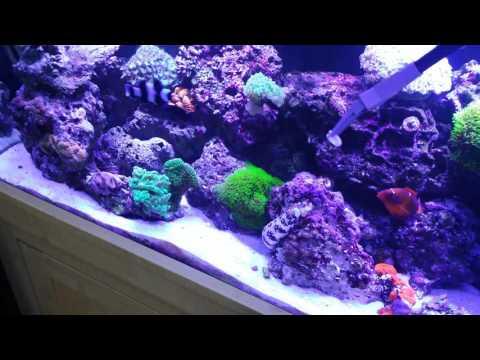 Feeding Snowflake Eel 90 Gallon Reef tank