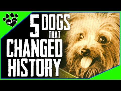 5 Dogs that CHANGED HISTORY Dogs 101 - Animal Facts
